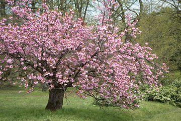 blühender Baum von Hilda booy