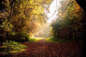 Waldweg in Herbstfarben und wässrigem Sonnenschein von Margriet Hulsker