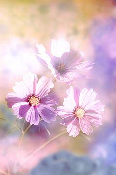 Drie bloemen van de zomer van Tanja Riedel
