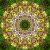 Rosa Rhodo van Frans Blok thumbnail