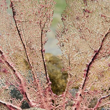 nature's lace van frederike simons