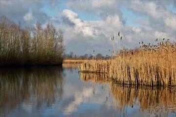 Typisch Hollands rivieren landschap met riet, wolkenpartijen en  bomen van Maud De Vries