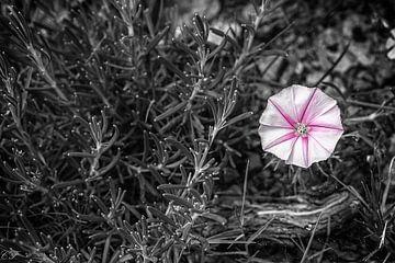 Fleur von Catherine Fortin