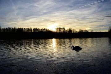 zwaan in de zonsondergang van Marcel Ethner