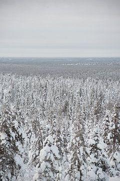bomen onder de sneeuw in lapland Finland van Robin van Maanen