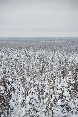 bomen onder de sneeuw in lapland Finland