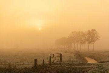 Neblige Morgenlandschaft im IJsseldelta bei Sonnenaufgang von Sjoerd van der Wal