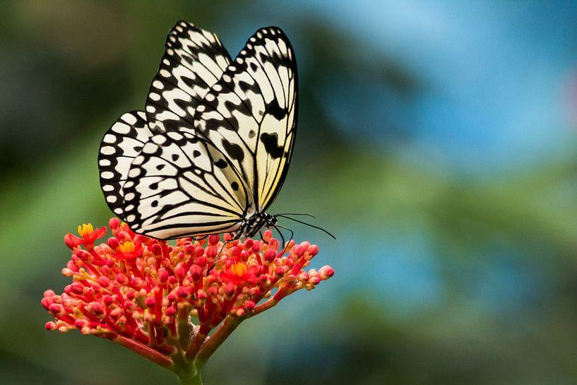Vlinder op rode bloem van The All Seeing Eye