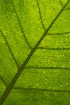 Grünes Blatt von Ronenvief