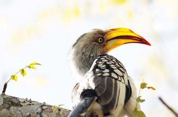 Vogel van Jojanneke Vos