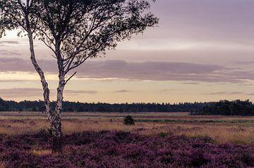 Strabrechtse Heide 116 van Deshamer