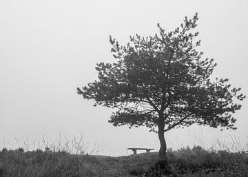 Bank unter einem Baum s/w von Saskia Pasman