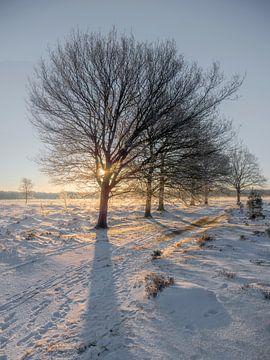 zonsopkomst in een witte wereld portrait stand van Henri van Rheenen