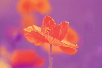 Orange Poppy van Renate Dohr
