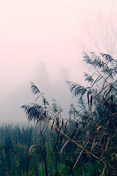 Tropisch Exotisch - boom, plant, veld, hoog gras, roze van Nicole Schyns