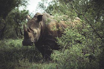 Neushoorn in Nationaal park Kruger. van Niels Jaeqx