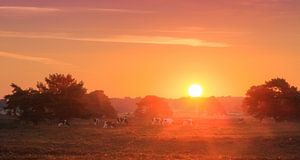 Veluwe  zonsopkomst panorama van