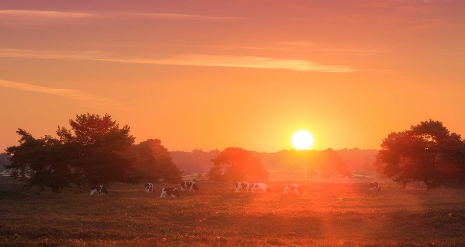 Veluwe  zonsopkomst panorama
