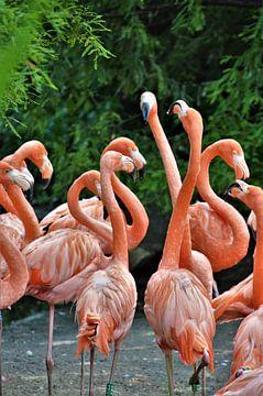 Florisante Flamingo's von DoDiLa Foto's