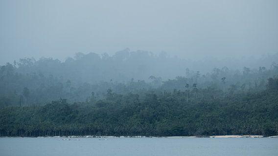 Regenwald Indonesien