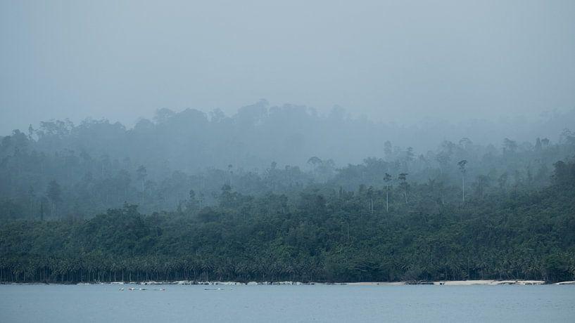 Regenwald Indonesien von Andy Troy