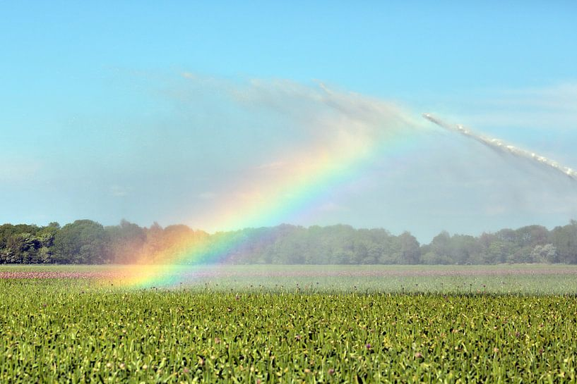 Regenboog door irrigatie veroorzaakt van Ronald Smits