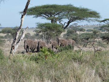 Olifanten familie op weg naar de waterbron van Rianne Magic moments