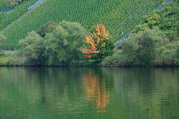 herfst aan de moezel  van Robert Lotman