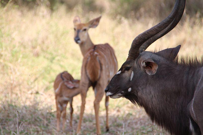 Tierfamilie von Marije Zwart