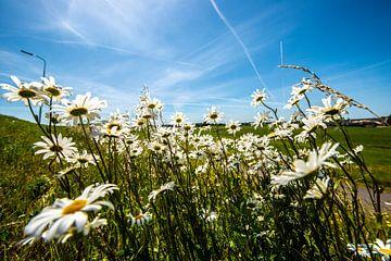 Wildblumen auf dem Deich von Brian Morgan