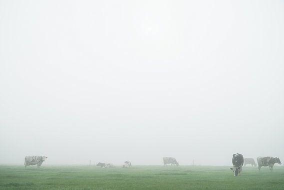 koeien in mistig weiland