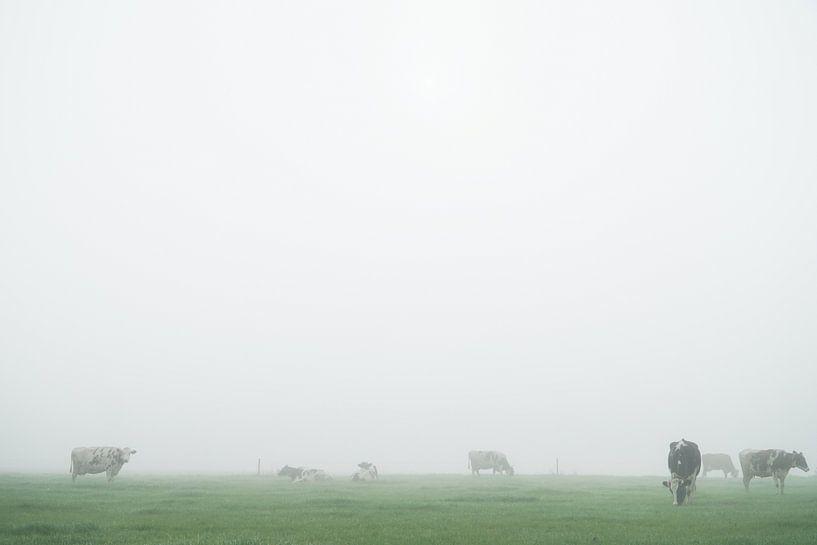 koeien in mistig weiland van Karin in't Hout