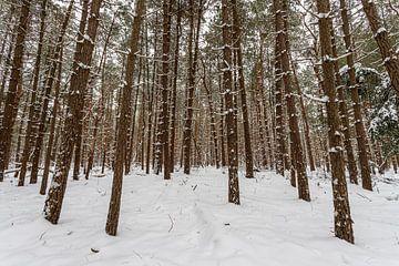 Winters bos 3 van Albert Mendelewski