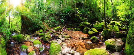 Tropisch regenwoud panorama van Dennis van de Water