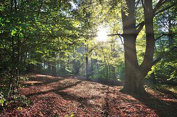 Zon schijnt door de takken van een bos van Robert de Jong