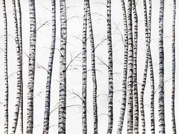Birken von Nika Akin
