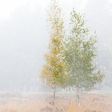 Birken im Nebel von Algon Photography