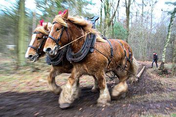 Horses at work van Laurence Meijer