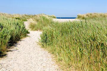 Weg zum Strand von Angelika Stern