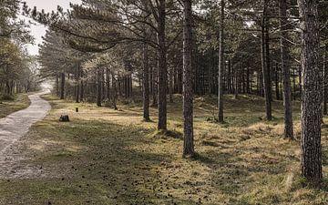 De weg door het bos van Bastiaan Schuit