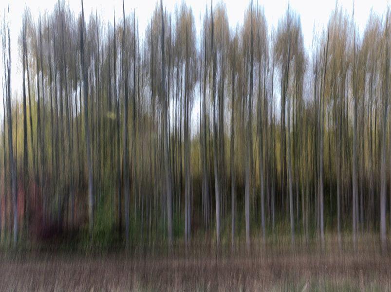 Bosque abstracto van Eddie Meijer