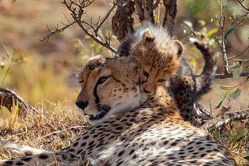 cheetah kind aan het spelen van Peter Michel