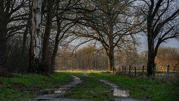 Wandelpad bij landgoed Eerde van Bert Visser