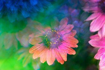 Echinacea fotografiert mit einem Prisma