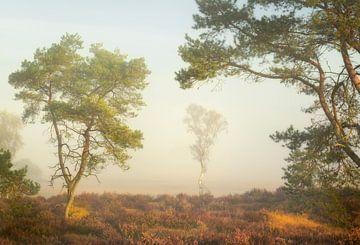 Wunderschönes sanftes Licht und Farben in der Kalmthoutse Heide von Jos Pannekoek