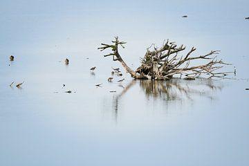 Vogels in de Oostvaardersplassen van Billy Bob Trueblood
