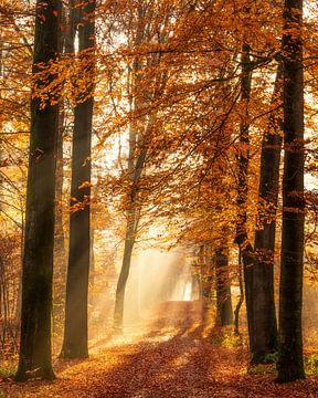 The beauty of Autumn van Thomas Jansen