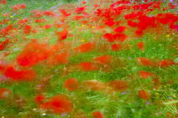 Poppies on the move van jowan iven