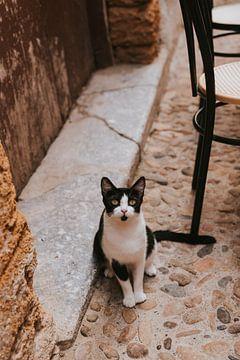Kat in de oude stad van Cefalu, Sicilië Italië van Manon Visser