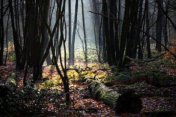 Lichtplek in donker herfstbos van Edwin Butter